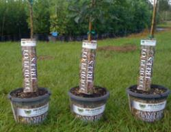 Realtree Nursery Food Plot Trees
