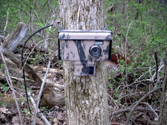 camtracker scouting camera on tree