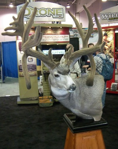 record mule deer mount in velvet
