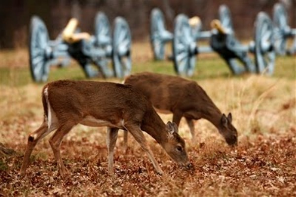 deer in valley forge park