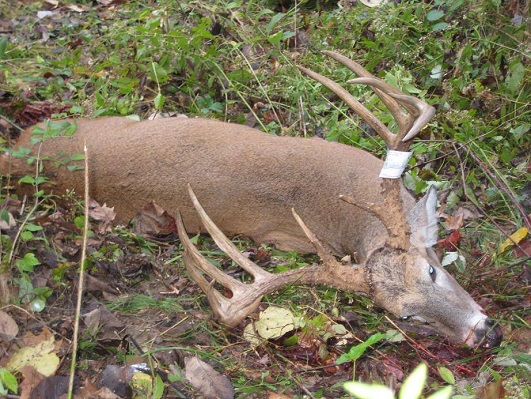 Deer hunting celebrity marc anthony fakes buck kill hunting news