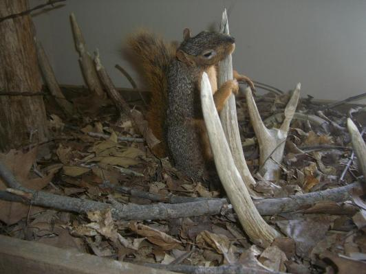 squirrel shed mount 3