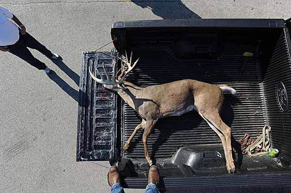 wisconsin giant buck in truck bed aerial