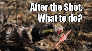 Shot a Deer, Now What?