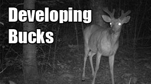 Placing Cameras for Developing Bucks?